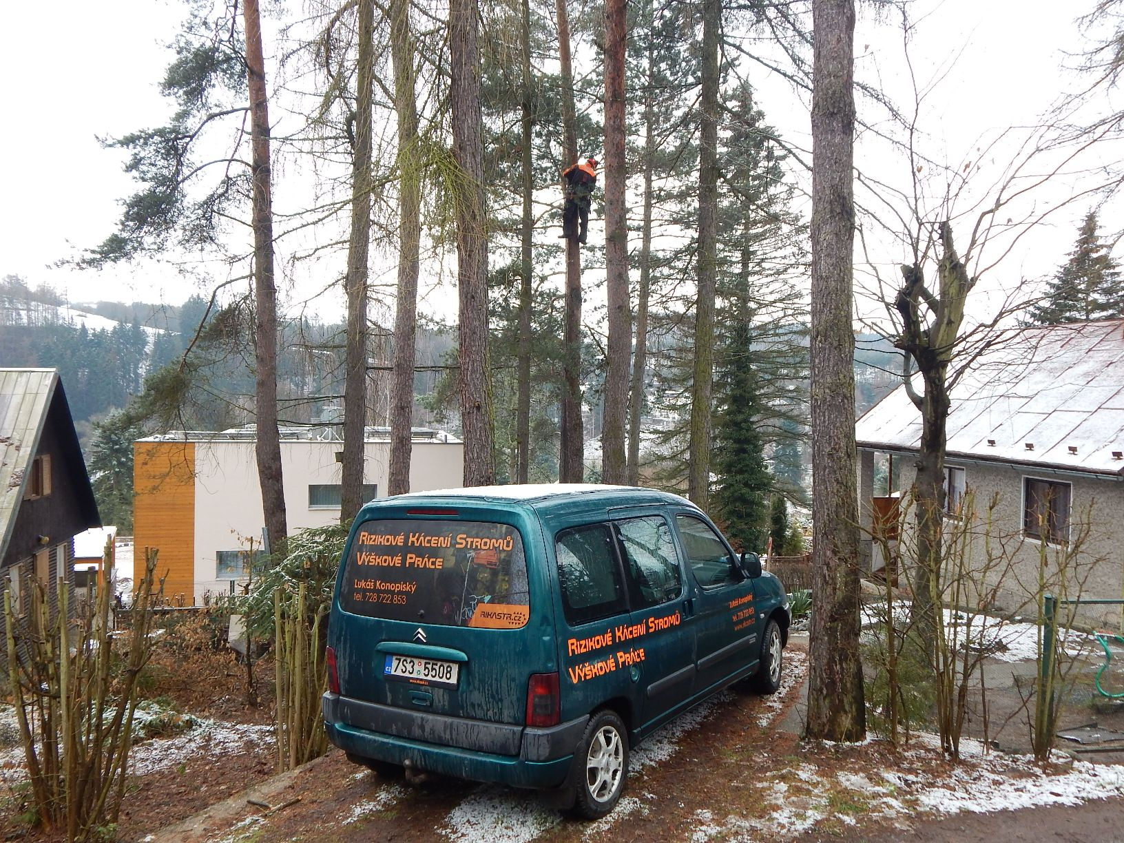 rizikové-kácení-stromu